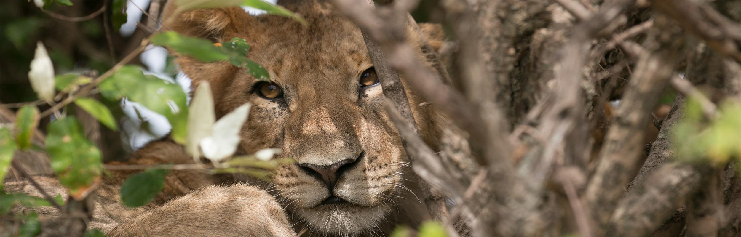 Safari naar Tanzania