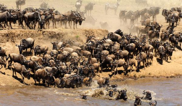 Grote oversteek Mara rivier, Kenia