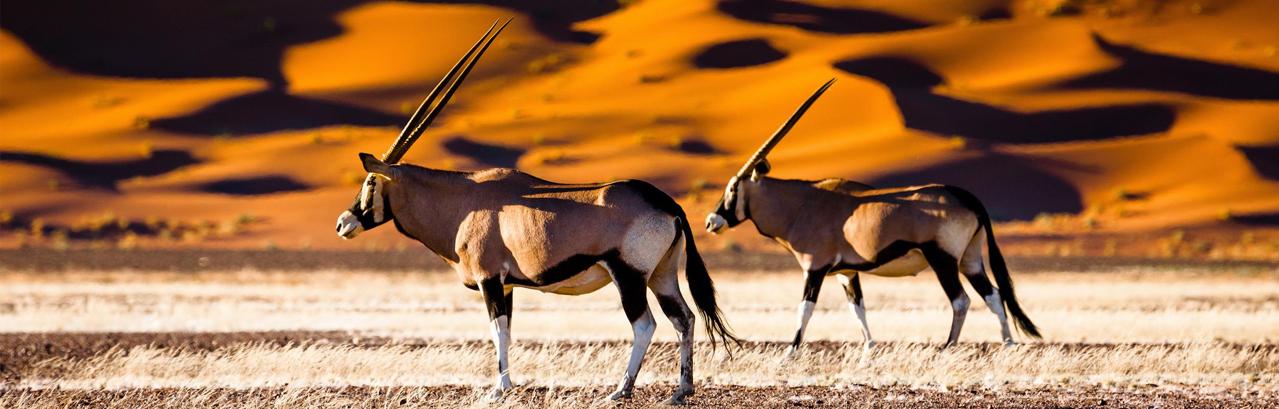 Hoogtepunten in Namibië