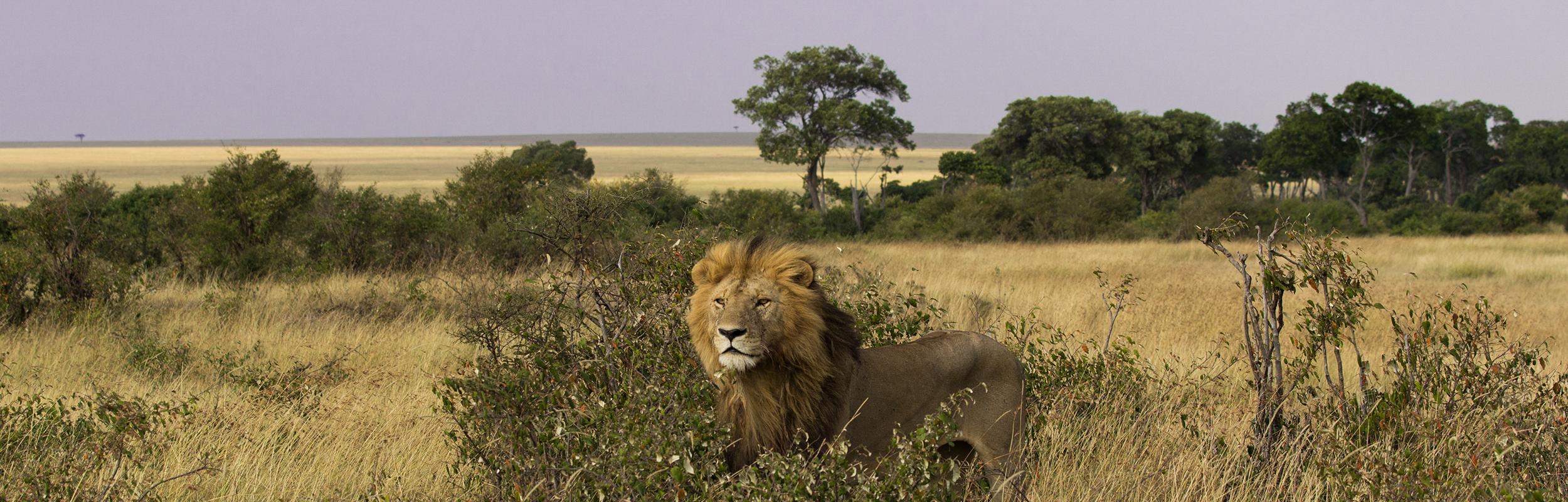 Hoogtepunten in Tanzania